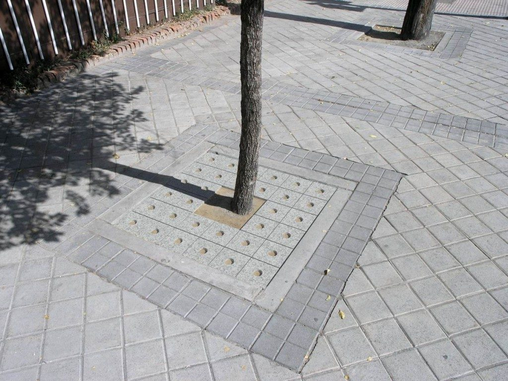 Barrosa Entourage arbre_GR